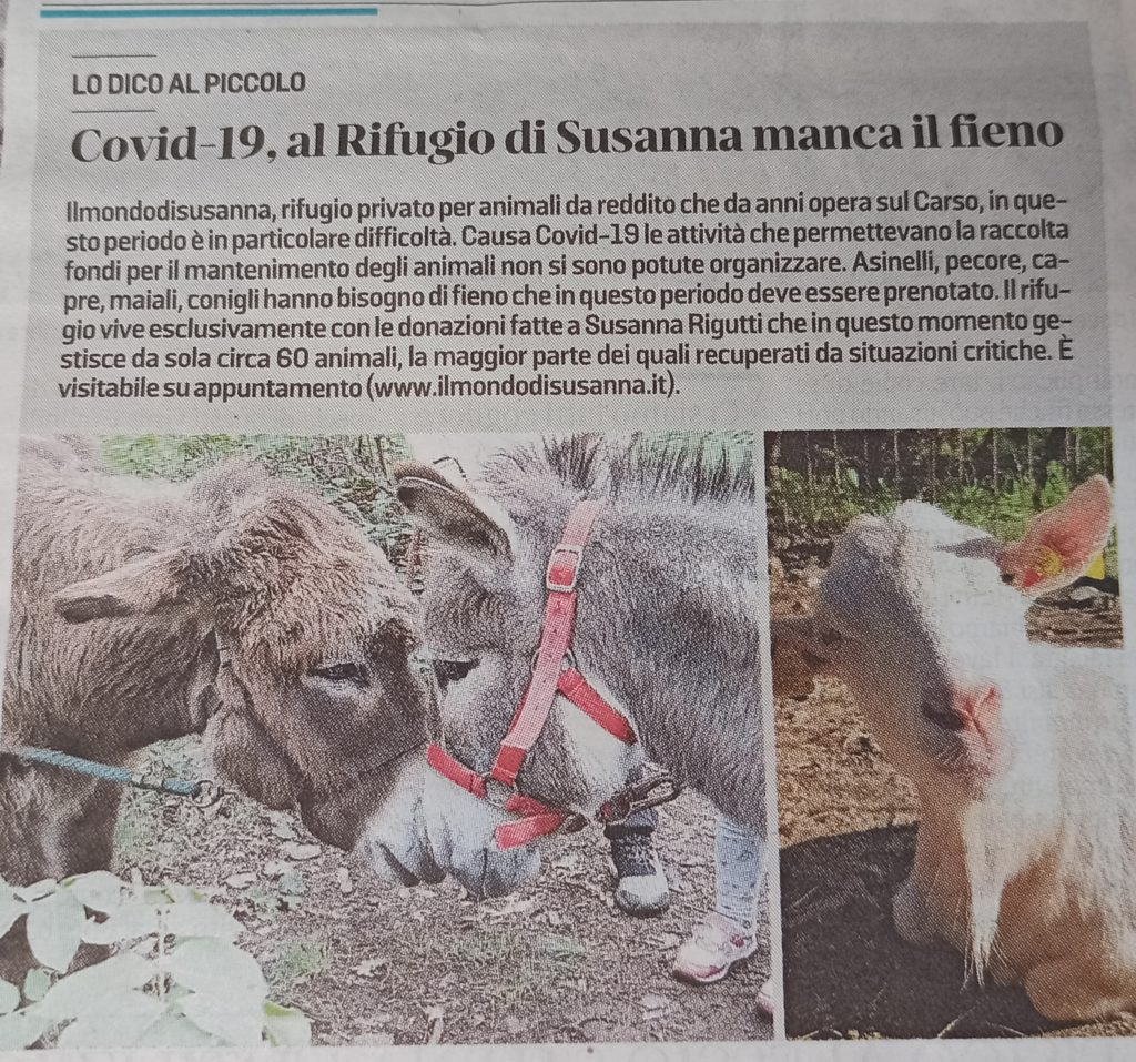 Articolo su Il Piccolo, giornale di Trieste